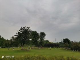 夏季里的资阳湿地公园美美哒!趁着好天气,去放松一下心情,好久没来了