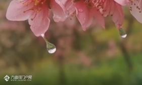 春雨貴如油,期待雨過天晴的資陽處處都能生機盎然