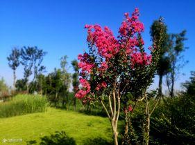分享随手拍!树木有了充足的阳光照射,夏日绿意也很美!