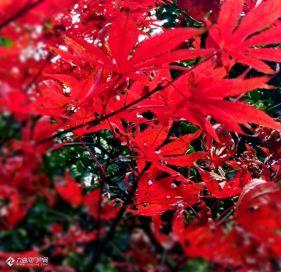 冬韵之美,资阳的三贤公园、九曲河畔、彩色落叶都太美丽了吧!