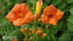 兩只小蜜蜂呀,飛在花叢中!資陽天氣逐漸變熱,花叢中隨處可見小蜜蜂~